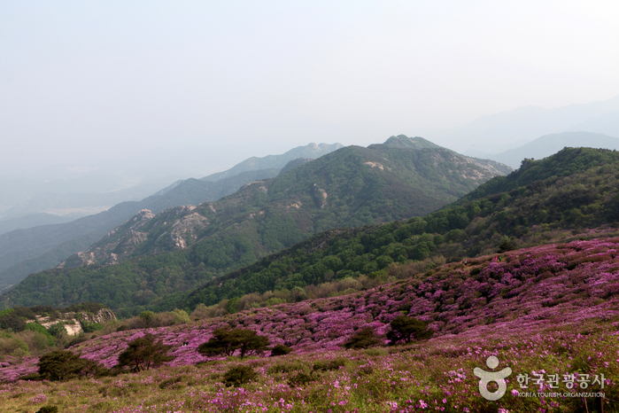 Hwangmaesan Mountain...
