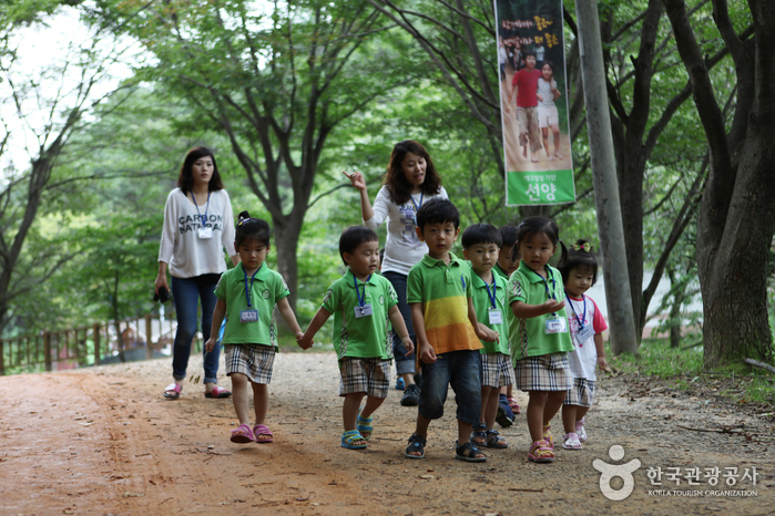 Gyejoksan Mountain Red Clay Trail (계족산 황톳길)
