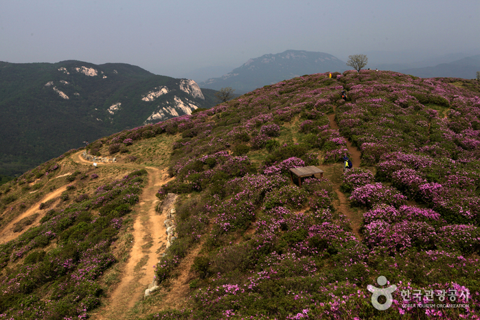Hwangmaesan Mountain - Sancheong District (황매산 (산청))