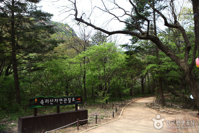 Songnisan Special Tourist Zone (속리산 관광특구)