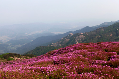 Hwangmaesan Mountain (Sancheong) (황매산 (산청))