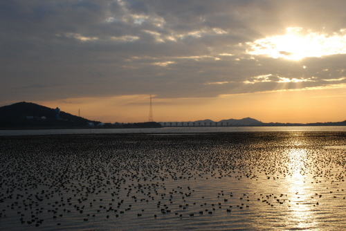 Gunsan International Migratory Bird Festival (군산세계철새축제)