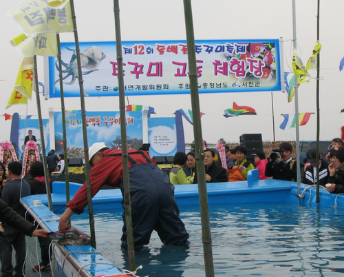 Seocheon Camellia Octopus Festival (서천 동백꽃주꾸미축제)