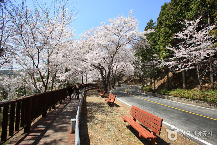 Anmingogae Hill (안민고...