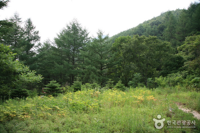 Gungmangbong Recreational Forest (Pocheon) (국망봉자연휴양림 (포천))