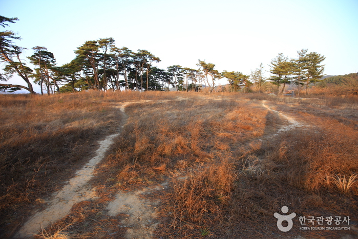 Gyeongju Najeong Well (경주 나정)