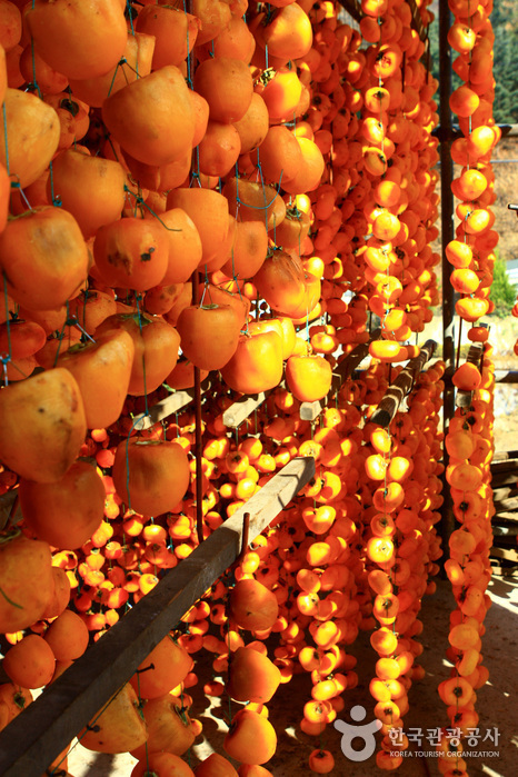 Yeongdong Dried Persimmons Festival (영동곶감축제)