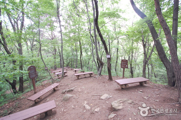 Closed: Seoul Grand Park Forest Park (서울대공원 산림욕장)